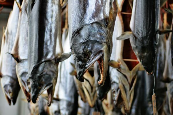 村上の伝統 塩引鮭